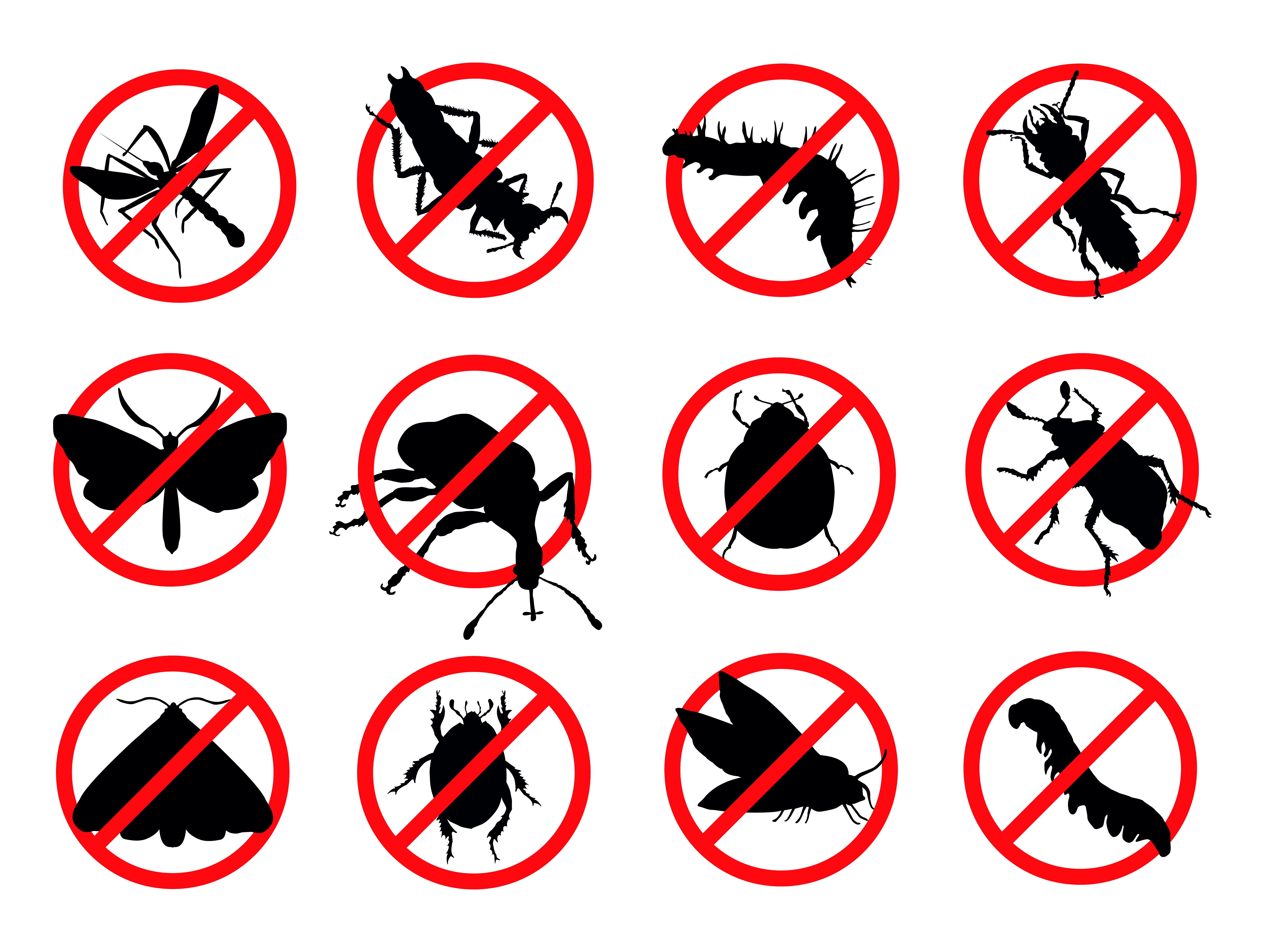 How Pest Control Companies Ensure Complete Elimination of The Infestation
