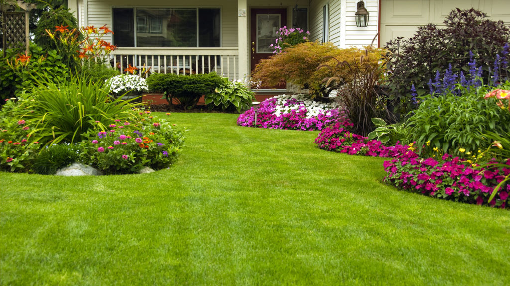 Proper Maintenance Of Synthetic Grass In Your San Diego Home